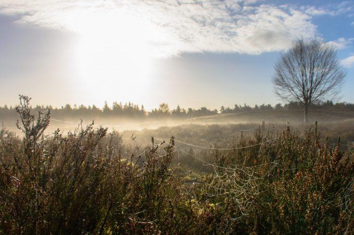 Frisse ochtendwandeling, landgoed Petrea
